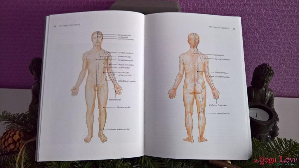 Gesund durch Yin Yoga Buch Stefanie Arend: Meridiane