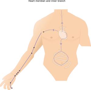 Herz Meridian Yin Yoga